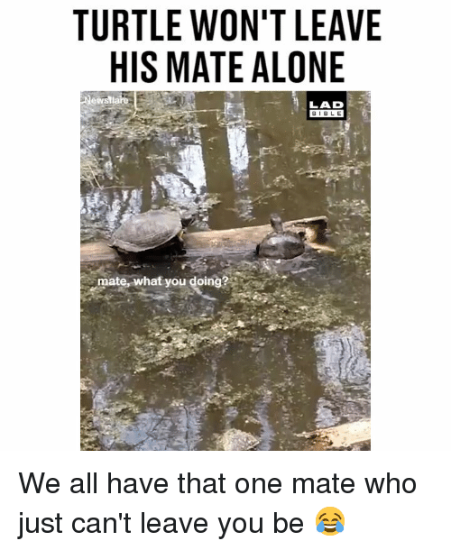 Being Alone, Memes, and Turtle: TURTLE WON'T LEAVE  HIS MATE ALONE  LAD  BIBL E  mate, what you doing? We all have that one mate who just can't leave you be 😂