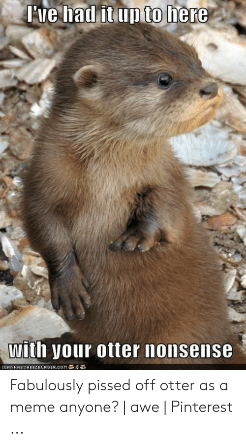 otter nonsense: Tve had it up to here  with your otter nonsense  ICANHASCHEEZEURGER,COM Fabulously pissed off otter as a meme anyone?   awe   Pinterest ...