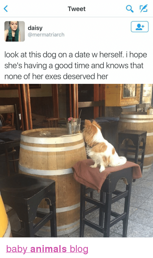"""Look At This Dog: Tweet  daisy  @mermatriarch  look at this dog on a date w herself. i hope  she's having a good time and knows that  none of her exes deserved her <p><a href=""""http://babyanimalgifs.tumblr.com/"""" target=""""_blank"""">baby <b>animals</b> blog</a></p>"""