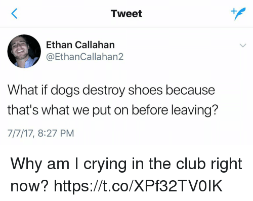 Club, Crying, and Dogs: Tweet  Ethan Callahan  @EthanCallahan2  What if dogs destroy shoes because  that's what we put on before leaving?  7/7/17, 8:27 PM Why am I crying in the club right now? https://t.co/XPf32TV0IK