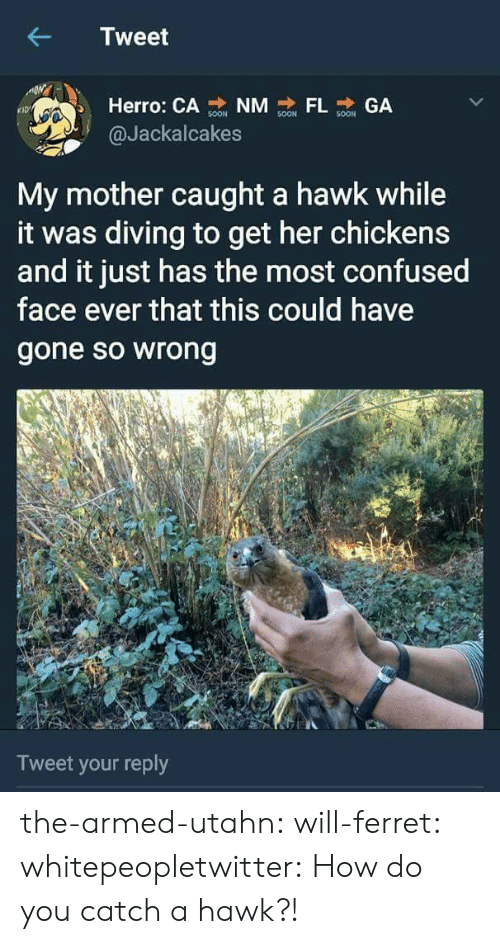 Diving: Tweet  Herro: CA NM GA  KID  @Jackalcakes  My mother caught a hawk while  it was diving to get her chickens  and it just has the most confused  face ever that this could have  gone so wrong  Tweet your reply the-armed-utahn: will-ferret:  whitepeopletwitter: How do you catch a hawk?!