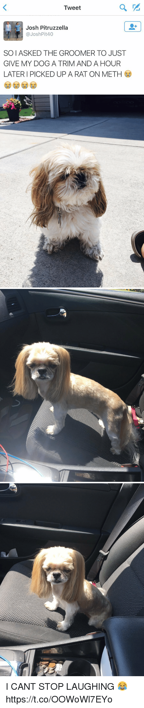 Groomers: Tweet  Josh Pitruzzella  p @Josh Pit40  SOIASKED THE GROOMER TO JUST  GIVE MY DOG A TRIM AND A HOUR  LATER PICKED UP A RAT ON METH I CANT STOP LAUGHING 😂 https://t.co/OOWoWl7EYo