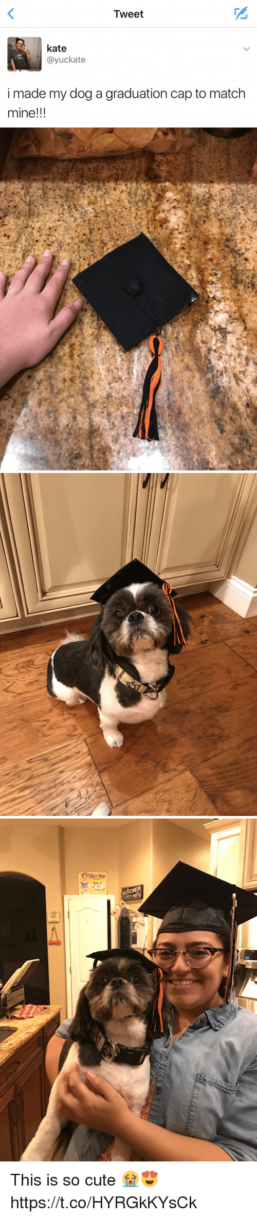 graduation cap: Tweet  kate  ayuckate  i made my dog a graduation cap to match  mine!!!   尚 This is so cute 😭😍 https://t.co/HYRGkKYsCk