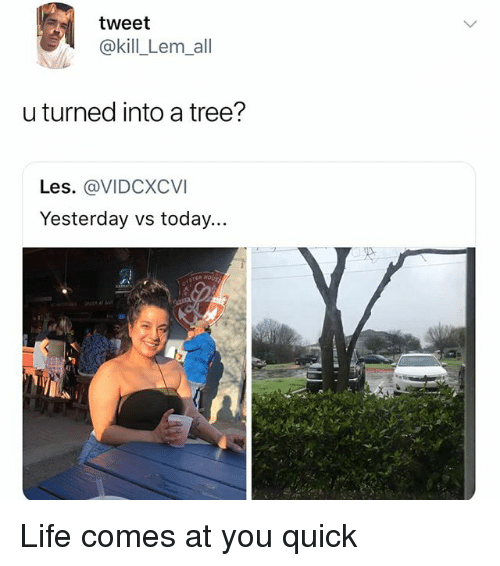 Life, Memes, and Today: tweet  @kill_Lem_all  u turned into a tree?  Les. @VIDCXCVI  Yesterday vs today...  2 Life comes at you quick