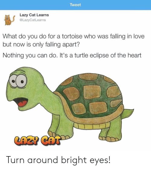 bright eyes: Tweet  Lazy Cat Learns  @LazyCatLearns  What do you do for a tortoise who was falling in love  but now is only falling apart?  Nothing you can do. It's a turtle eclipse of the heart  LAZ? CAT Turn around bright eyes!