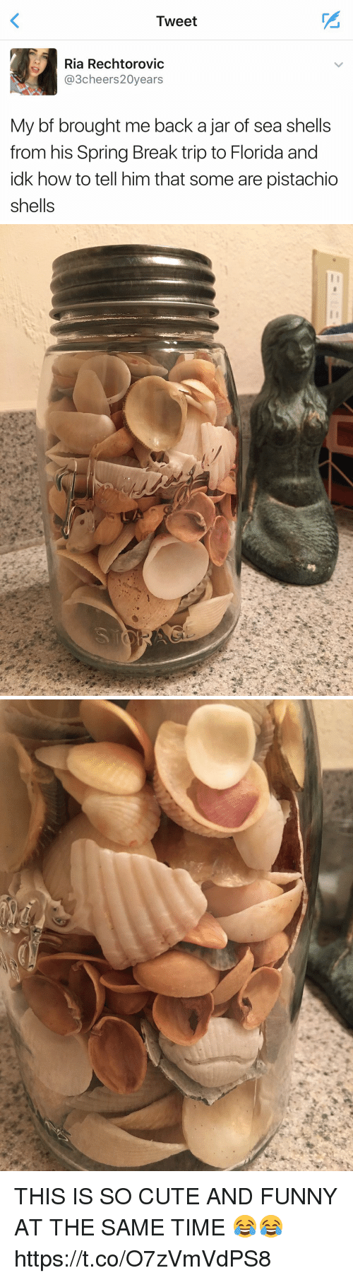 Cute, Funny, and Spring Break: Tweet  Ria Rechtorovic  3cheers20years  My bf brought me back a jar of sea shells  from his Spring Break trip to Florida and  idk how to tell him that some are pistachio  shells   ソ THIS IS SO CUTE AND FUNNY AT THE SAME TIME 😂😂 https://t.co/O7zVmVdPS8