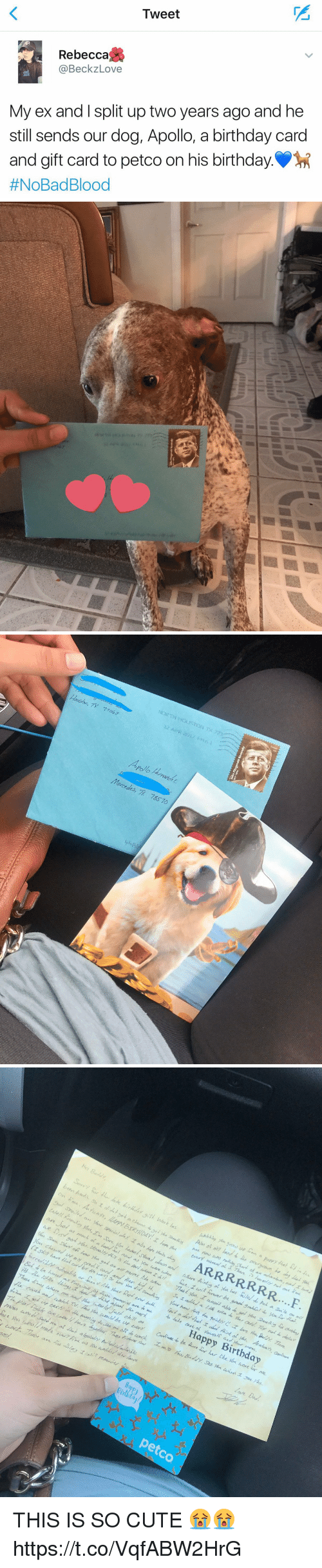 Plies: Tweet  TI  Rebecca  @BeckzLove  My ex and I split up two years ago and he  still sends our dog, Apollo, a birthday card  and gift card to petco on his birthday..  #NoBad Blood   Hoston, TX  71043  Mercedes, 78570  pli   Happy Birthday  45  idar  petco THIS IS SO CUTE 😭😭 https://t.co/VqfABW2HrG