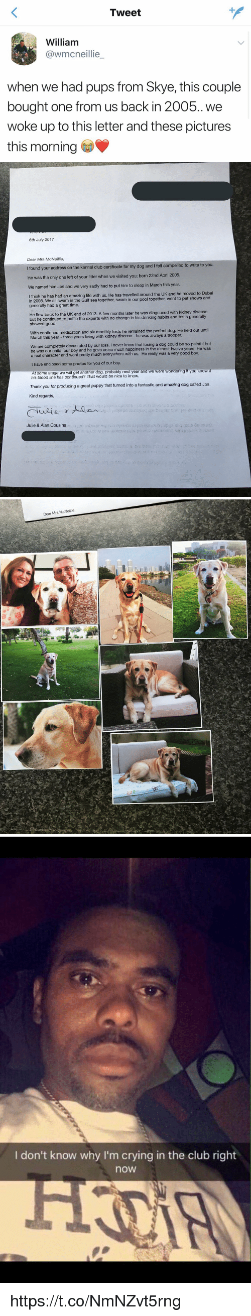 Bloods, Club, and Crying: Tweet  William  @wmcneillie  when we had pups from Skye, this couple  bought one from us back in 2005. we  woke up to this letter and these pictures  this morning   6th July 2017  Dear Mrs McNeillie  e kennel club certificate for my dog and I felt compelled to write to you.  He was the only one left of your litter when we visited you; born 22nd April 2005.  We named him Jos and we very sadly had to put him to sleep in March this year  think he has had an amazing life with us. He has travelled around the UK and he moved to Dubai  in 2008. We all swam in the Gulf sea together, swam in our pool  generally had a great time.  I together, went to pet shows and  He flew back to the UK end of 2013. A few months later he was diagnosed with kidney disease  but he continued to baffle the experts with no change in his drinking habits and tests generally  showed good.  With continued medication and six monthly tests he remained the perfect dog. He held out until  March this year - three years living with kidney disease - he was always a trooper.  We are completely devastated by our loss. I never knew that losing a dog could be so painful but  he was our child, our boy and he gave us so much happiness in the almost twelve years. He was  a real character and went pretty much everywhere with us. He really was a very good boy.  I have enclosed some photos for you of our boy  At some stage we will get another dog, probably next year and we were wondering if you know  his blood line has continued? That would be nice to know  Thank you for producing a great puppy that turned into a fantastic and amazing dog called Jos  Kind regards,  Julie & Alan Cousins   Dear Mrs McNeillie   I don't know why I'm crying in the club right  now https://t.co/NmNZvt5rng