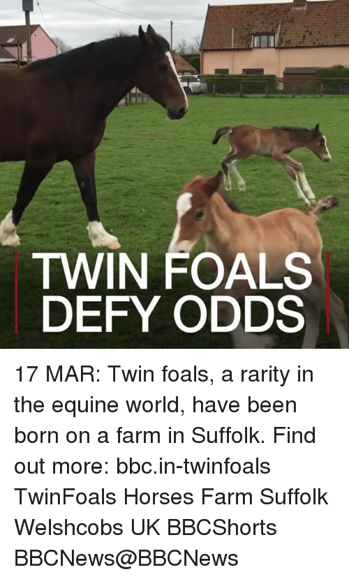 Memes, 🤖, and Bbc: TWIN FOALS  DEFY ODDS 17 MAR: Twin foals, a rarity in the equine world, have been born on a farm in Suffolk. Find out more: bbc.in-twinfoals TwinFoals Horses Farm Suffolk Welshcobs UK BBCShorts BBCNews@BBCNews