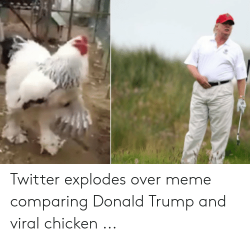 Rooster Meme: Twitter explodes over meme comparing Donald Trump and viral chicken ...