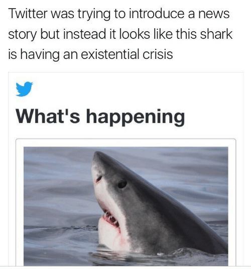 what's happening: Twitter was trying to introduce a news  story but instead it looks like this shark  is having an existential crisis  What's happening