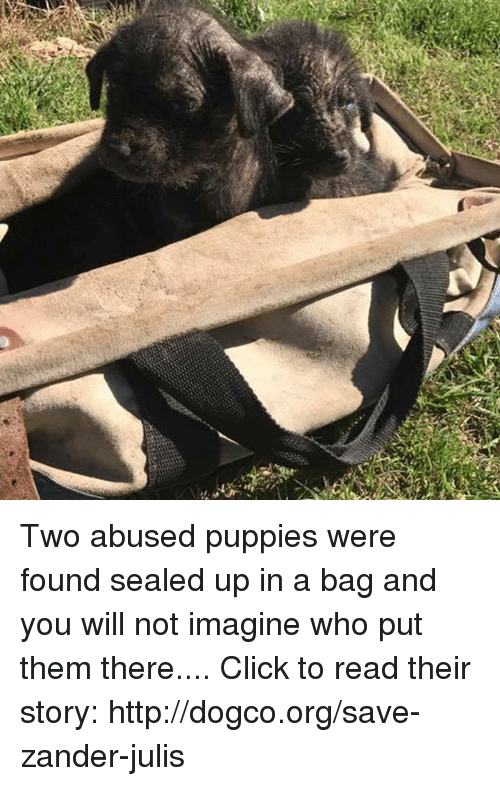 Click, Memes, and Http: Two abused puppies were found sealed up in a bag and you will not imagine who put them there....  Click to read their story: http://dogco.org/save-zander-julis