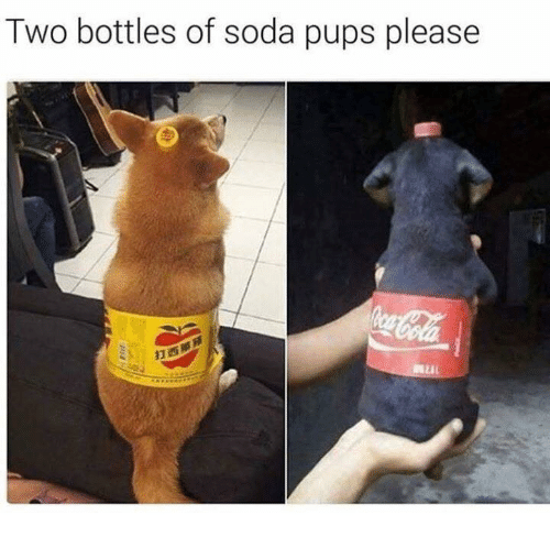 Dogs, Soda, and Pleased: Two bottles of soda pups please
