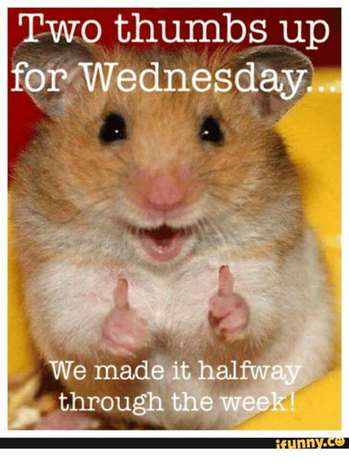 Thumb Up: Two thumbs up  for Wednesday.  We made it halfway  through the week!  funny