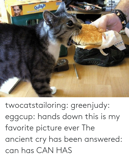 Answered: twocatstailoring:  greenjudy: eggcup: hands down this is my favorite picture ever The ancient cry has been answered: can has  CAN HAS