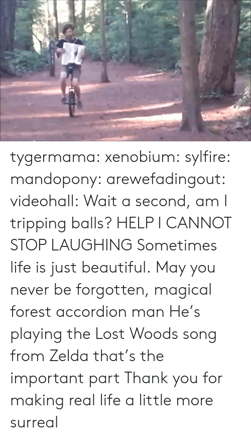 surreal: tygermama: xenobium:  sylfire:  mandopony:  arewefadingout:  videohall:  Wait a second, am I tripping balls?  HELP I CANNOT STOP LAUGHING  Sometimes life is just beautiful.  May you never be forgotten, magical forest accordion man  He's playing the Lost Woods song from Zelda that's the important part   Thank you for making real life a little more surreal