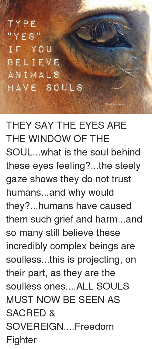 Soullessness: TYPE  YES  Ir  IF YOU  BELIEVE  ANIMALS  HAVE SOULS THEY SAY THE EYES ARE THE WINDOW OF THE SOUL...what is the soul behind these eyes feeling?...the steely gaze shows they do not trust humans...and why would they?...humans have caused them such grief and harm...and so many still believe these incredibly complex beings are soulless...this is projecting, on their part, as they are the soulless ones....ALL SOULS MUST NOW BE SEEN AS SACRED & SOVEREIGN....Freedom Fighter