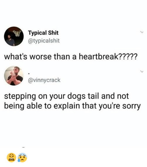 Dogs, Memes, and Shit: Typical Shit  @typicalshit  what's worse than a heartbreak?????  @vinnycrack  stepping on your dogs tail and not  being able to explain that you're sorry 😩😰