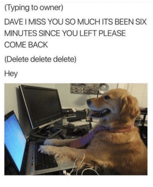 i miss you so much: (Typing to owner)  DAVE I MISS YOU SO MUCH ITS BEEN SIX  MINUTES SINCE YOU LEFT PLEASE  COME BACK  (Delete delete delete)  Hey