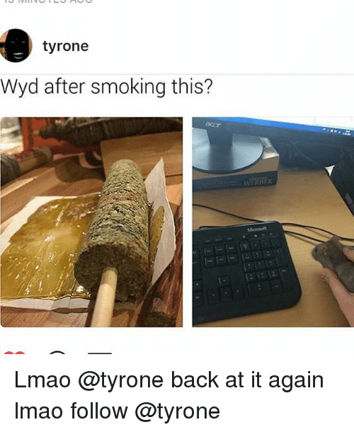Funny, Wyd, and Back at It Again: tyrone  Wyd after smoking this?  WERBER Lmao @tyrone back at it again lmao follow @tyrone