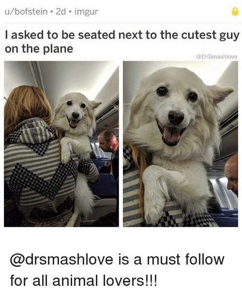 Memes, Animal, and Imgur: u/bofstein . 2d. imgur  I asked to be seated next to the cutest guy  on the plane  @DrSmashlove @drsmashlove is a must follow for all animal lovers!!!
