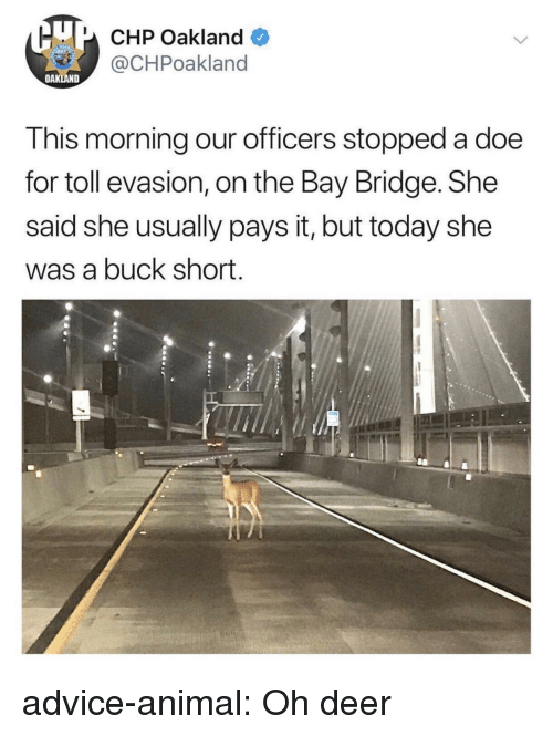 doe: U CHP Oakland  @CHPoakland  OAKLAND  This morning our officers stopped a doe  for toll evasion, on the Bay Bridge. She  said she usually pays it, but today she  was a buck short. advice-animal:  Oh deer