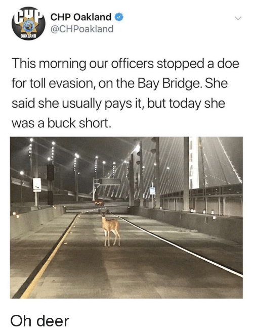 doe: U CHP Oakland  @CHPoakland  OAKLAND  This morning our officers stopped a doe  for toll evasion, on the Bay Bridge. She  said she usually pays it, but today she  was a buck short. Oh deer