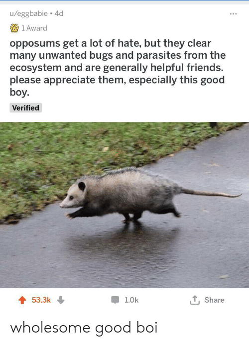 unwanted: u/eggbabie 4d  1 Award  opposums get a lot of hate, but they clear  many unwanted bugs and parasites from the  ecosystem and are generally helpful friends.  please appreciate them, especially this good  boy.  Verified  53.3k  1.0k  Share wholesome good boi