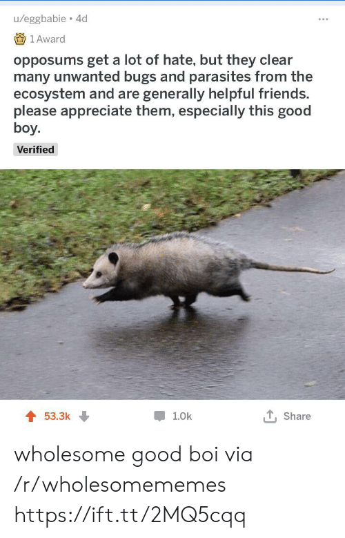 unwanted: u/eggbabie 4d  1 Award  opposums get a lot of hate, but they clear  many unwanted bugs and parasites from the  ecosystem and are generally helpful friends.  please appreciate them, especially this good  boy.  Verified  T, Share  53.3k  1.0k wholesome good boi via /r/wholesomememes https://ift.tt/2MQ5cqq