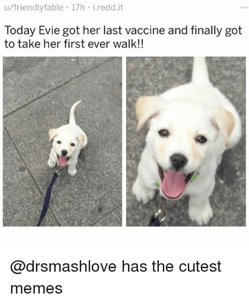 Funny, Memes, and Today: u/friendlyfable 17h i.redd.it  Today Evie got her last vaccine and finally got  to take her first ever walk!! @drsmashlove has the cutest memes