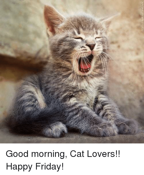 25 best memes about good morning cats good morning cats memes. Black Bedroom Furniture Sets. Home Design Ideas