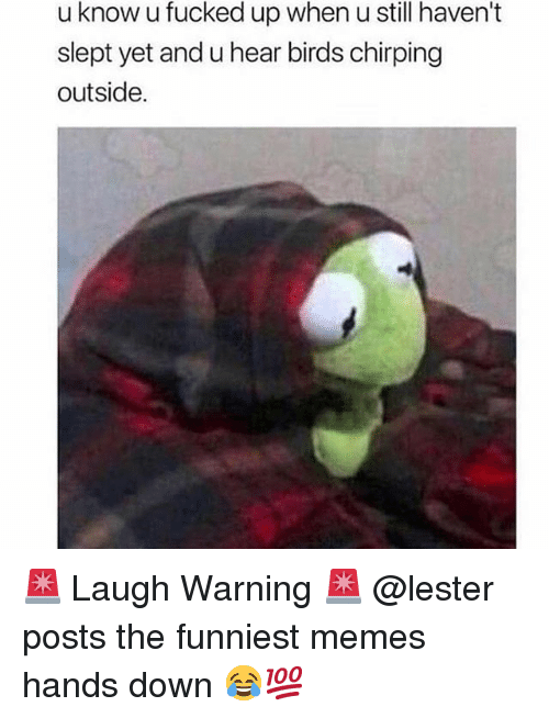 Memes, Birds, and Trendy: u know u fucked up when u still haven't  slept yet and u hear birds chirping  outside. 🚨 Laugh Warning 🚨 @lester posts the funniest memes hands down 😂💯