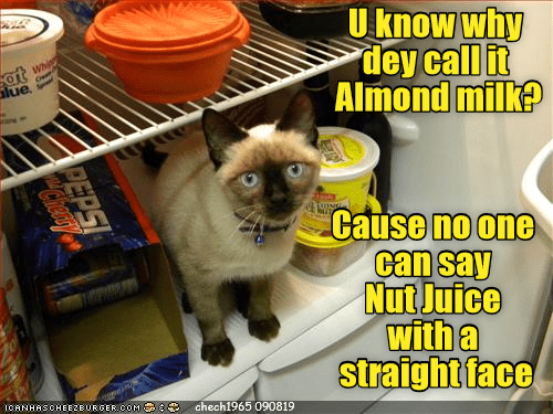Lue: U know why  dey call it  Almond milk?  Whip  at  lue  Cause no one  can say  Nut Juice  with a  straight face  ICANHASCHEE2EURGER cOM  chech1965 090819