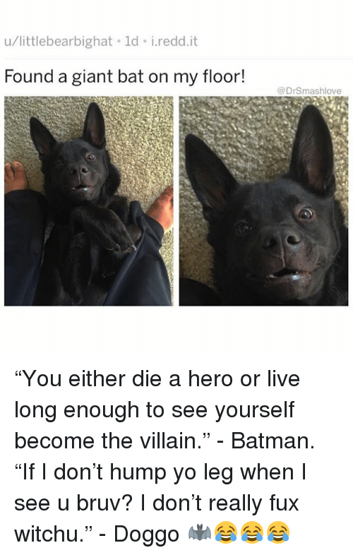 "Batman, Memes, and Yo: u/littlebearbighat ld i.redd.it  Found a giant bat on my floor!  @DrSmashlove ""You either die a hero or live long enough to see yourself become the villain."" - Batman. ""If I don't hump yo leg when I see u bruv? I don't really fux witchu."" - Doggo 🦇😂😂😂"
