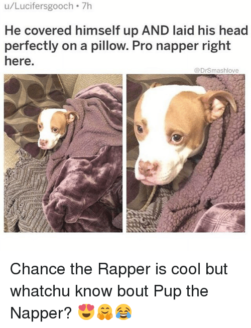 Chance the Rapper, Head, and Memes: u/Lucifersgooch 7h  He covered himself up AND laid his head  perfectly on a pillow. Pro napper right  here  @DrSmashlove Chance the Rapper is cool but whatchu know bout Pup the Napper? 😍🤗😂