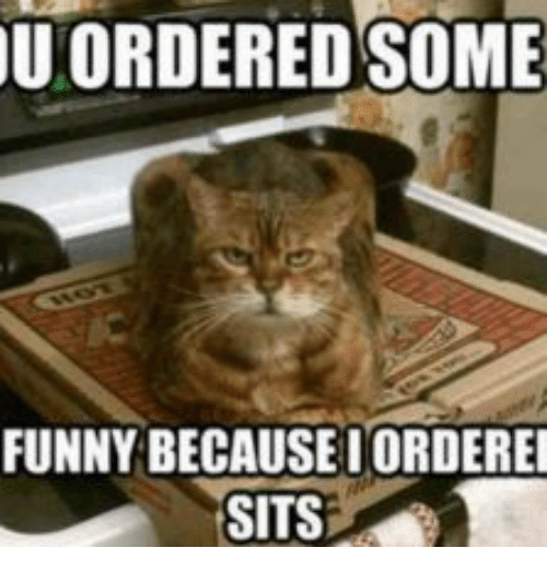 u ordered some funny becauseiorderei sits 14032613 u ordered some funny becauseiorderei sits cat sitting on pizza
