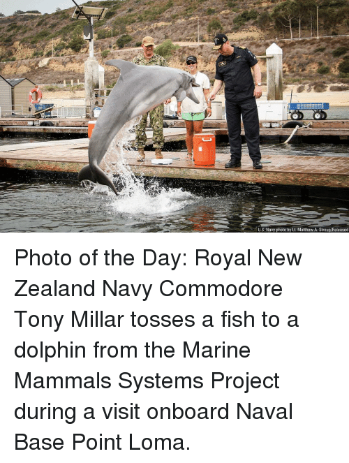 Tosses: U.S. Navy photo by Lt. Matthew A. Stroup/Released Photo of the Day: Royal New Zealand Navy Commodore Tony Millar tosses a fish to a dolphin from the Marine Mammals Systems Project during a visit onboard Naval Base Point Loma.