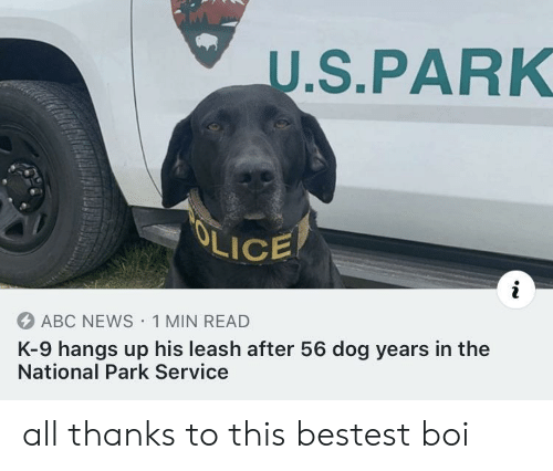 Abc News: U.S.PARK  OLICE  ABC NEWS 1 MIN READ  K-9 hangs up his leash after 56 dog years in the  National Park Service all thanks to this bestest boi