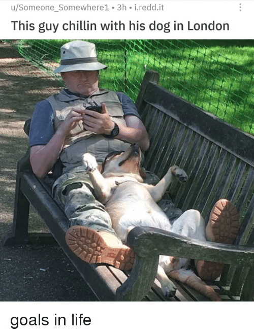 Goals In Life: u/Someone_Somewhere1 3h i.redd.it  This guy chillin with his dog in London goals in life