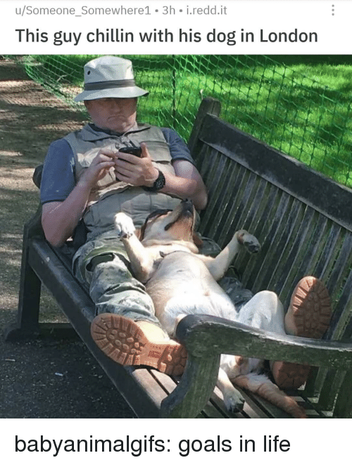 Goals In Life: u/Someone_Somewhere1 3h i.redd.it  This guy chillin with his dog in London babyanimalgifs:  goals in life