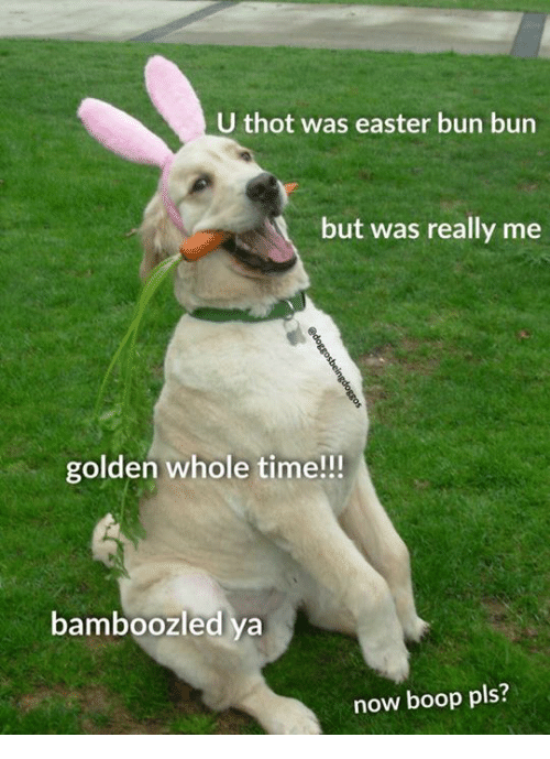 Easter, Memes, and Thot: U thot was easter bun bun  but was really me  golden whole time!!!  bamboozled ya  now boop pls?