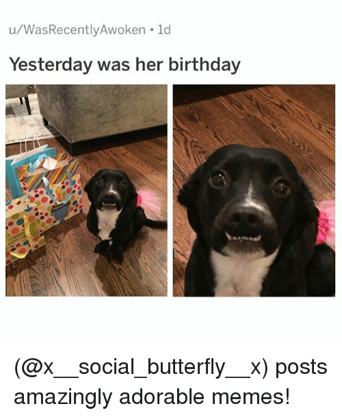 Birthday, Memes, and Butterfly: u/WasRecentlyAwoken ld  Yesterday was her birthday (@x__social_butterfly__x) posts amazingly adorable memes!