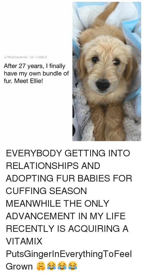 Life, Memes, and Relationships: u/Wizensparrow 1d i.redd.it  After 27 years, I finally  have my own bundle of  fur. Meet Ellie! EVERYBODY GETTING INTO RELATIONSHIPS AND ADOPTING FUR BABIES FOR CUFFING SEASON MEANWHILE THE ONLY ADVANCEMENT IN MY LIFE RECENTLY IS ACQUIRING A VITAMIX PutsGingerInEverythingToFeelGrown 🤗😂😂😂