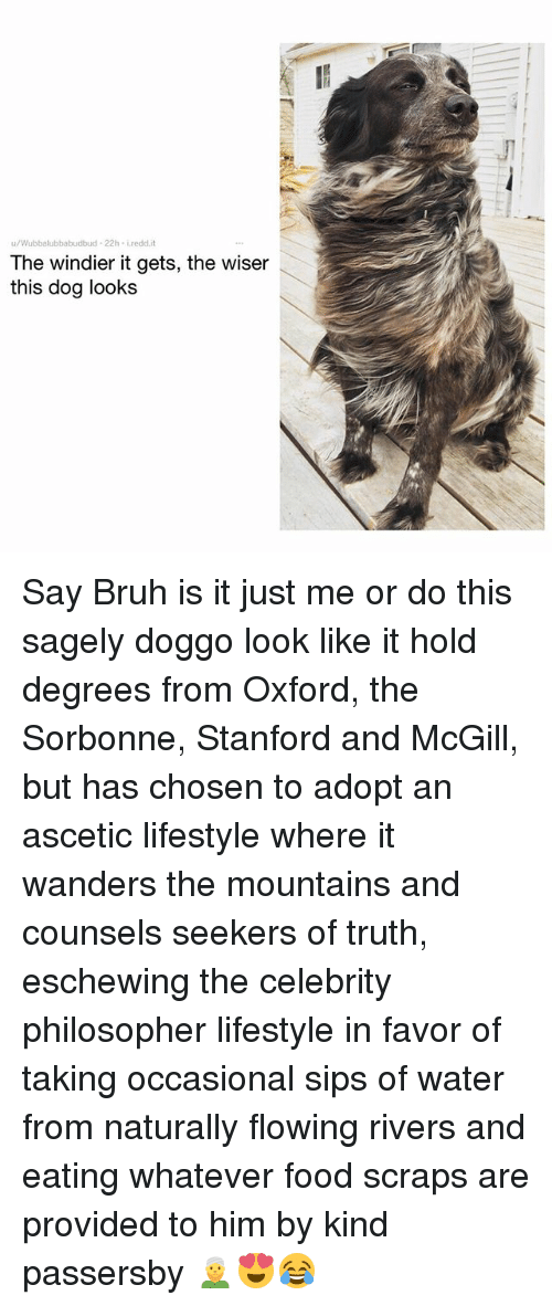 Bruh, Food, and Memes: u/Wubbalubbabudbud-22h iredd.i  The windier it gets, the wiser  this dog looks Say Bruh is it just me or do this sagely doggo look like it hold degrees from Oxford, the Sorbonne, Stanford and McGill, but has chosen to adopt an ascetic lifestyle where it wanders the mountains and counsels seekers of truth, eschewing the celebrity philosopher lifestyle in favor of taking occasional sips of water from naturally flowing rivers and eating whatever food scraps are provided to him by kind passersby 👳😍😂