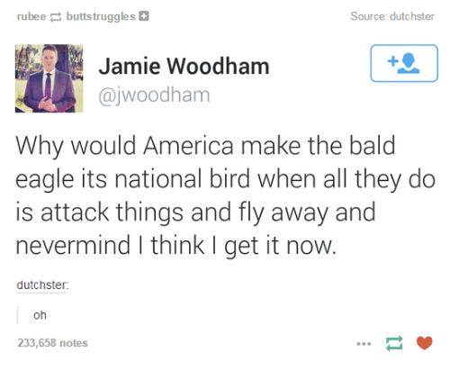 America, Eagle, and Humans of Tumblr: ubeebuttstruggles  Source: dutchster  Jamie Woodham  @jwoodham  Why would America make the bald  eagle its national bird when all they do  is attack things and fly away and  nevermind I think I get it now  dutchster  oh  233,658 notes