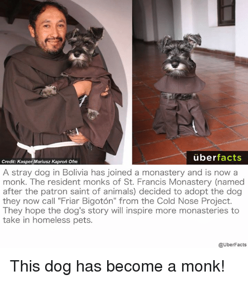 """Memes, 🤖, and Monk: uber  facts  Credit: Kasper Mariusz Kapron Ofm  A stray dog in Bolivia has joined a monastery and is now a  monk. The resident monks of St. Francis Monastery (named  after the patron saint of animals) decided to adopt the dog  they now call """"Friar Bigoton"""" from the Cold Nose Project.  They hope the dog's story will inspire more monasteries to  take in homeless pets.  @UberFacts This dog has become a monk!"""