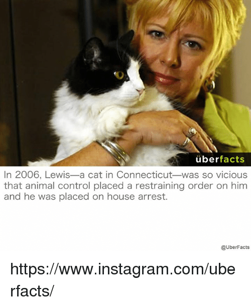 Animals, Facts, and Instagram: uber  facts  In 2006, Lewis-a cat in Connecticut was so vicious  that animal control placed a restraining order on him  and he was placed on house arrest.  @UberFacts https://www.instagram.com/uberfacts/
