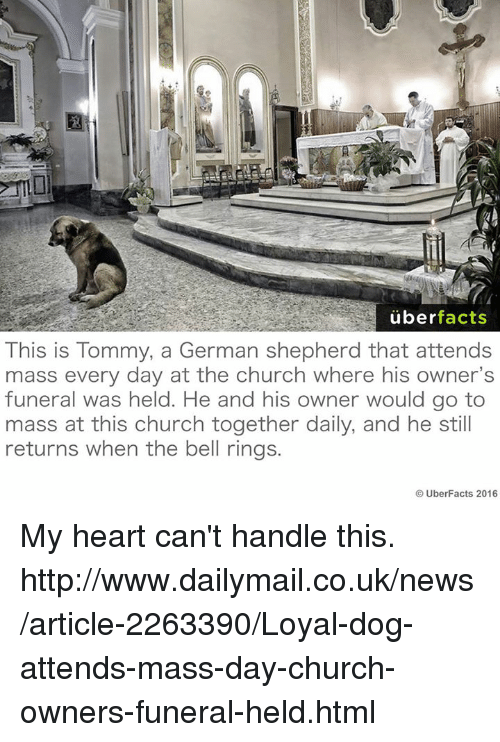 bell ringing: uber  facts  This is Tommy, a German shepherd that attends  mass every day at the church where his owner's  funeral was held. He and his owner would go to  mass at this church together daily, and he still  returns when the bell rings.  Uber Facts 2016 My heart can't handle this.  http://www.dailymail.co.uk/news/article-2263390/Loyal-dog-attends-mass-day-church-owners-funeral-held.html