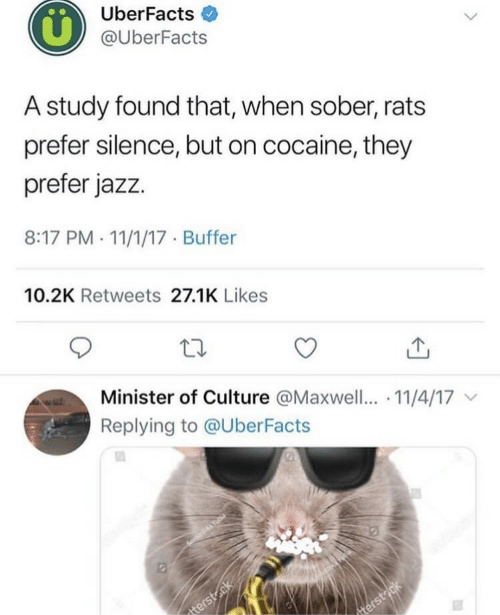 Uberfacts: UberFacts  @UberFacts  A study found that, when sober, rats  prefer silence, but on cocaine, they  prefer jazz.  8:17 PM . 11/1/17 Buffer  10.2K Retweets 27.1K Likes  Minister of Culture @Maxwell.. 11/4/17  Replying to @UberFacts