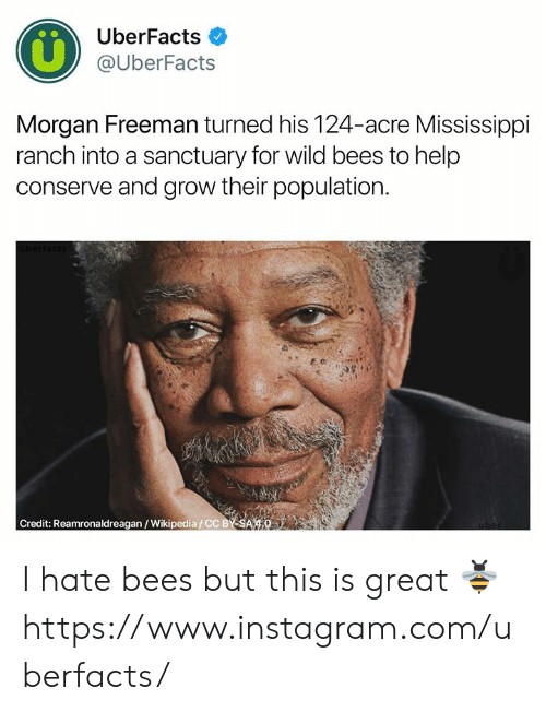 Morgan Freeman: UberFacts  @UberFacts  Morgan Freeman turned his 124-acre Mississippi  ranch into a sanctuary for wild bees to help  conserve and grow their population  Credit: Reamronaldreagan/Wikipedia/CC BY SA 4.0 I hate bees but this is great 🐝  https://www.instagram.com/uberfacts/